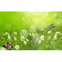 Fototapet Natura Personalizat - Musetel si Fluturi