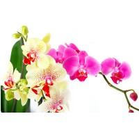 Fototapet Natura Personalizat - O Orhidee