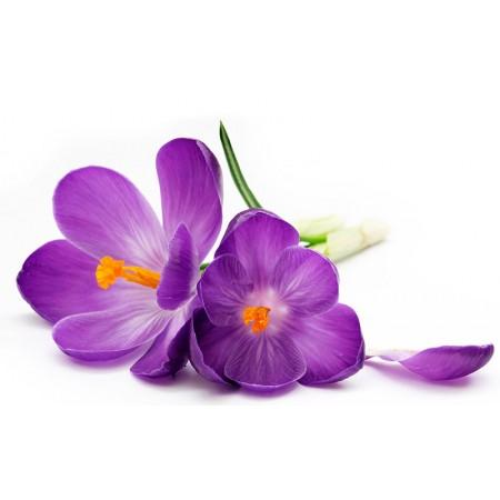 Fototapet Natura Personalizat - Floare Mov