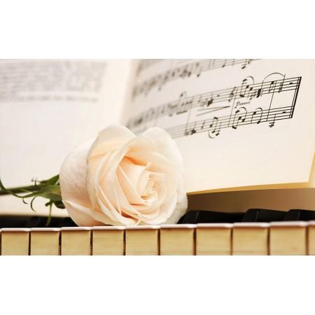 Fototapet Natura Personalizat - Trandafir Muzical
