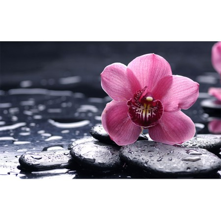 Fototapet Natura Personalizat - Zen