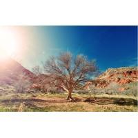 Fototapet Natura Personalizat - Rasarit in Desert