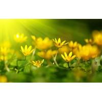 Fototapet Natura Personalizat - Flori Galbene