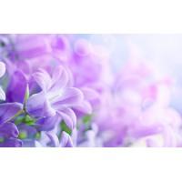Fototapet Natura Personalizat - Flori Violet