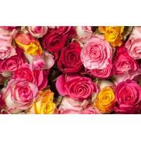 Fototapet Natura Personalizat - Trandafirii