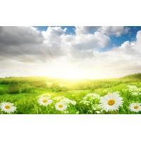Fototapet Natura Personalizat - Musetel