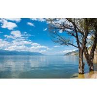 Fototapet Natura Personalizat - Copaci pe mal