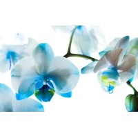 Fototapet Natura Personalizat - Flori Albastre