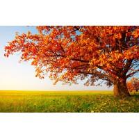 Fototapet Natura Personalizat - Copac Ruginiu