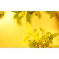 Fototapet Natura Personalizat - Galben
