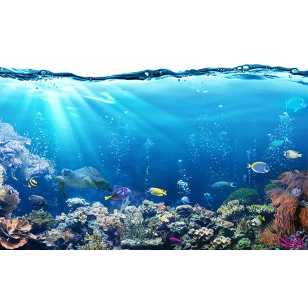 Fototapet Natura Personalizat - In Ocean