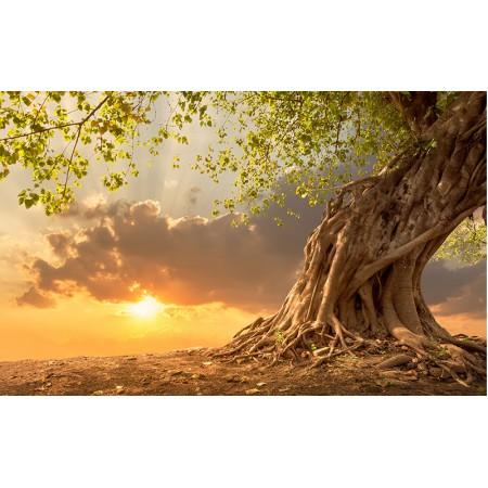 Fototapet Natura Personalizat - Copac la Apus
