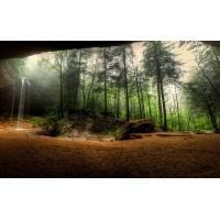 Fototapet Natura Personalizat - Padurea Superba