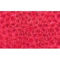 Fototapet Texturi Personalizat - Trandafiri Rosii