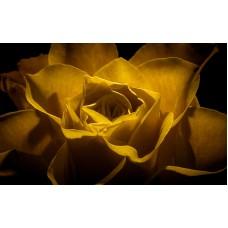 Fototapet Vintage Personalizat - Floarea